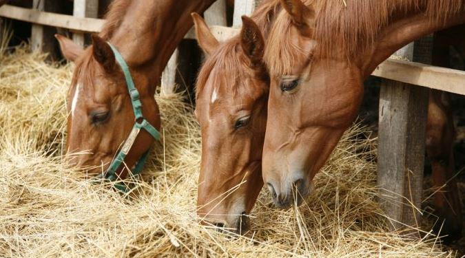 Gesundes Pferdeeinstreu